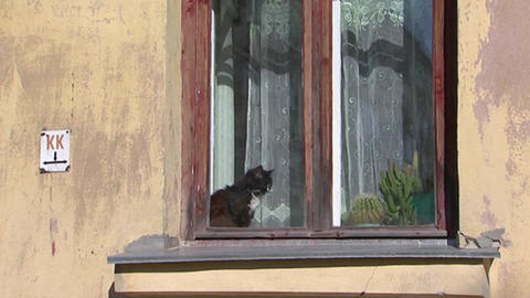 Cat sitting on the windowsill and looks out the window Stock Video Footage
