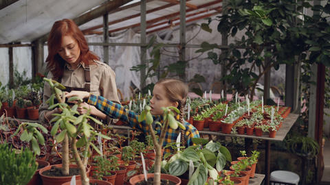Adorable child is counting flowers in greenhouse while her mother is entering Footage