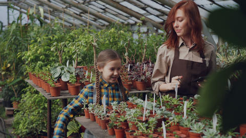 Young woman gardener in apron and her daughter are dancing in greenhouse having Footage