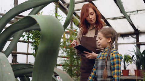 Experienced female gardener and her cute daughter are looking at plants in Footage