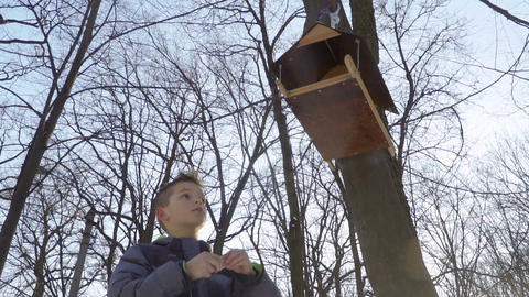 Little boy feed birds and put pieces of bread into bird feeders Footage