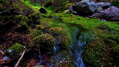 Moss Covered Forest and Stream Footage