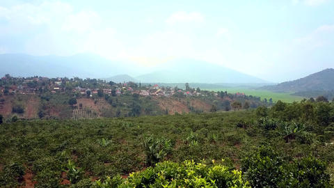 coffee trees grow on mountain hill against distant city GIF