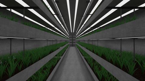 isolated underground greenhouse GIF