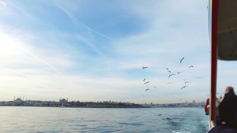 Seagull flying slow motion. Istanbul, Sarayburnu Footage