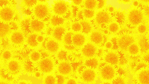 Floral Background Animation