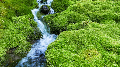 Small mountain stream surrounded by moss covered rocks Footage