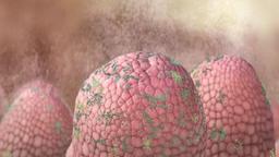 Pathogenic Bacteria Footage