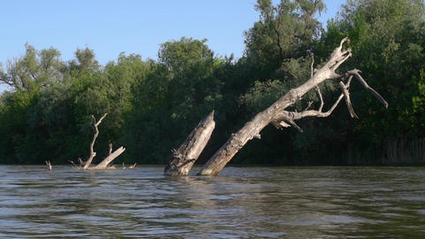 Dry tree in the river, time-lapse Footage