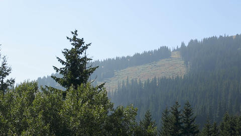 Forest and rocky mountain top with line cable cars, skiing resort in summer Footage