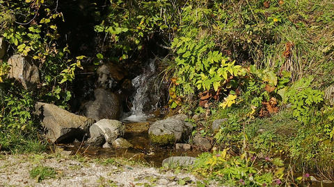 Streamlet running down a hill covered in plants, crystal clean water, wilderness Footage