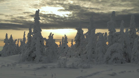 Christmas trees are covered with snow .Beautiful mountain landscape. Lots of Footage
