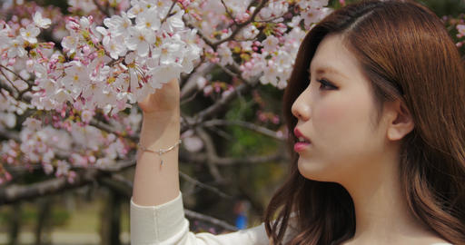 Attractive Japanese girl wearing white plays with sakura cherry blossoms and her Footage