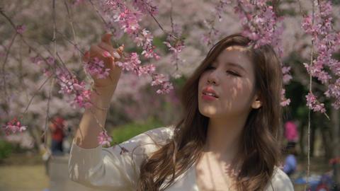 Beautiful Japanese girl walking under amzing cherry blossom sakura tree Slow mot ビデオ