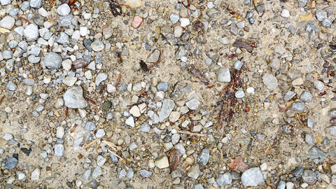 Timelapse of ants running around Footage