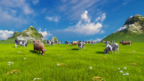 Dairy cows on green alpine meadow Footage