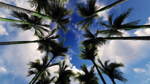 Alley palms on clouds sky Footage