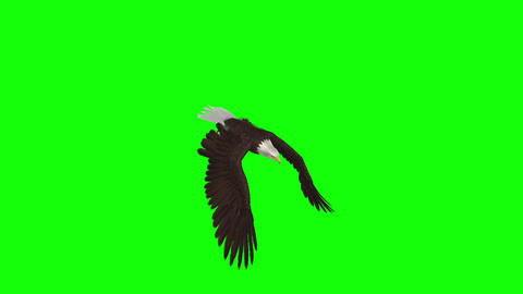 American Eagle - Top Angle - Green Screen Animation