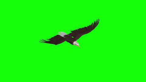 [alt video] American Eagle - Top Angle - Green Screen