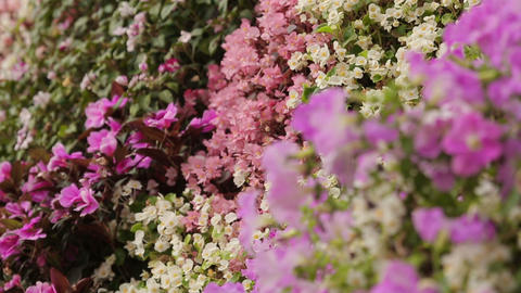 Different types and colors of flowers on floral wall, beautiful garden, close-up Footage