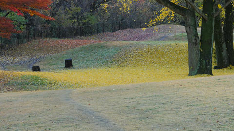Autumn Leaves in Park GIF