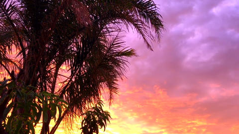 Palm tree against vivid colorful sunset handheld static with copy space Footage