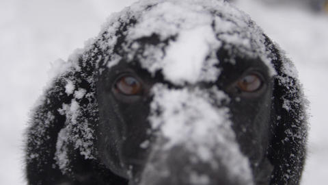 Dog muzzle in snow looks at you Live Action