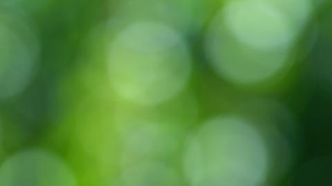 4k Colorful bokeh defocussed greenery nature background with blue highlights Footage