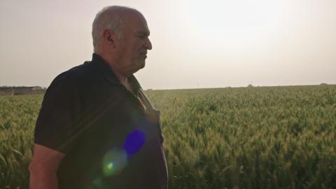 Steadycam shot of an old farmer walking in a green wheat field Footage