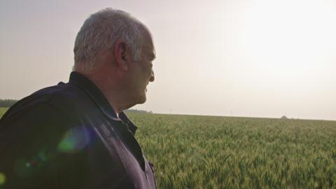 Steadycam shot of an old farmer walking in a green wheat field ビデオ