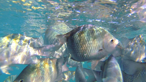 Snorkeling with ocean fish Footage