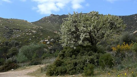 peach tree Stock Video Footage