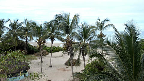 palms on the beach Stock Video Footage