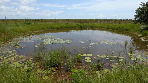 pond Stock Video Footage