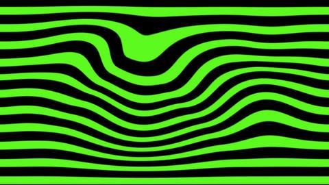 green zebra Stock Video Footage