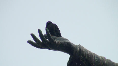 The pigeon on the palm of the monument Stock Video Footage