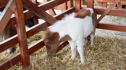 Stable with pony horses Footage