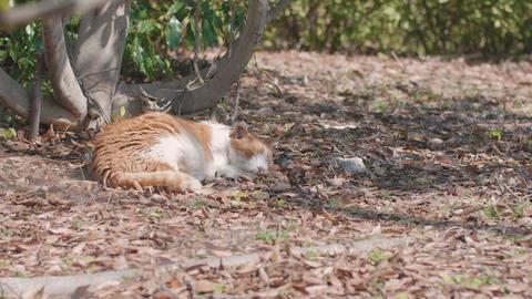 Sleeping Cat,at Showa Memorial Park,Tokyo,Japan,Filmed in 4K ビデオ