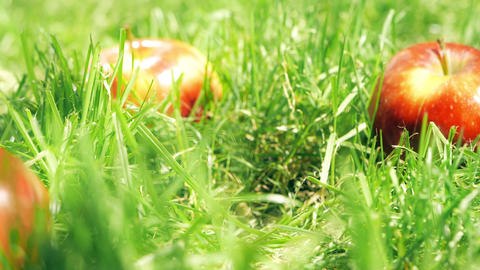 Red ripe apple falling on the grass, slow motion shot Footage