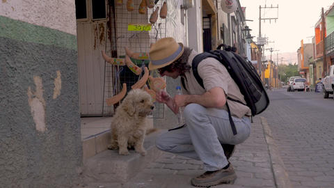 Caucasian man wearing a backpack and a hat bends down to pet a friendly stray GIF