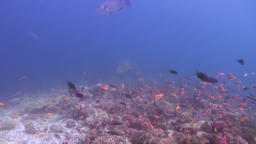 School flock of colorful fish in sea soup on reef ビデオ
