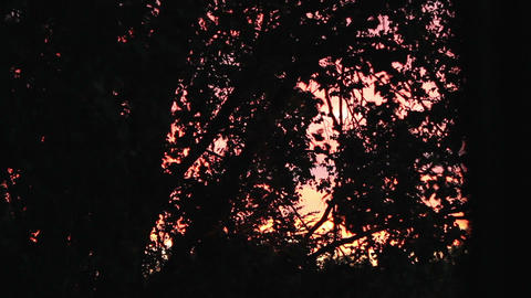 Waving trees in a red sunset background - evening Footage