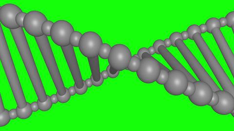 Scrolling DNA molecule. Closeup. Green Screen Animation