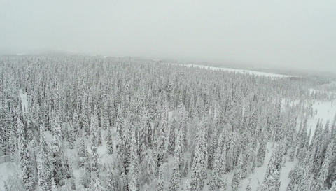 Winter Forest With Frosty Trees From Air Footage