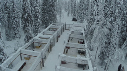 Riding at dog sledge in winter woods, aerial view Footage