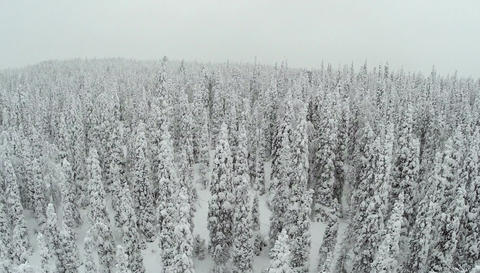 Winter landscape with snow covered pine trees Footage