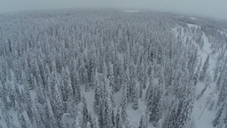 Endless expanse of winter pinery, aerial view Footage
