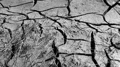 global warming and drought, the deep splitting of soil from thirst Footage