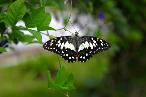 Black White Butterfly Closeup Photo