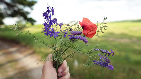 Male hand holding a bouquet of wildflowers. Summer vacation concept Footage